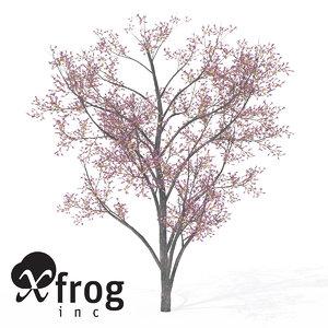 xfrogplants judas tree 3d max
