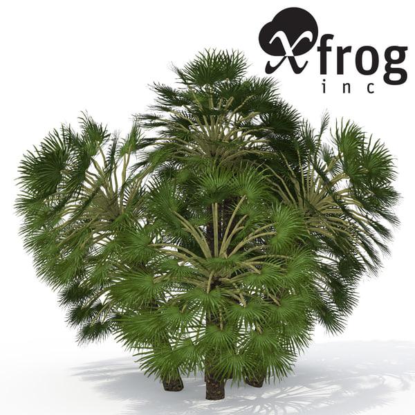 3d model xfrogplants mediterranean fan palm