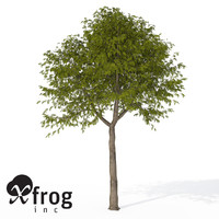 3d model xfrogplants manna ash tree