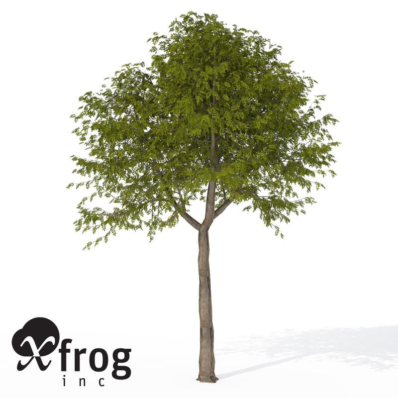 3d model xfrogplants manna ash tree
