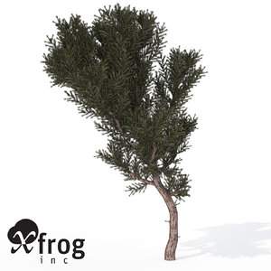 3d model xfrogplants prickly juniper tree