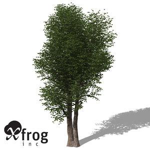 max xfrogplants laurel tree