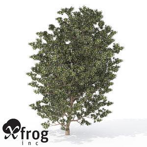 xfrogplants myrtle tree shrub 3d 3ds
