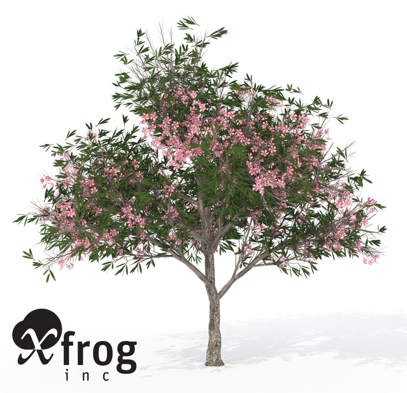 3ds xfrogplants oleander tree shrub