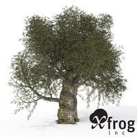 XfrogPlants Olive Tree