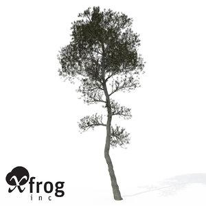 aleppo pine tree 3d model