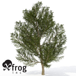 xfrogplants lentisk tree shrub 3d model