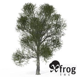xfrogplants turkey oak tree 3d 3ds