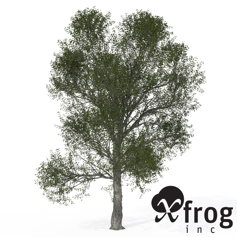 xfrogplants turkey oak tree 3d 3ds