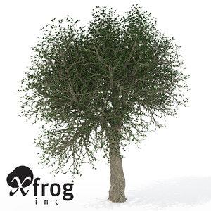 max xfrogplants cork oak tree