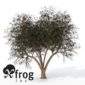 lightwave xfrogplants french tamarisk tree shrub