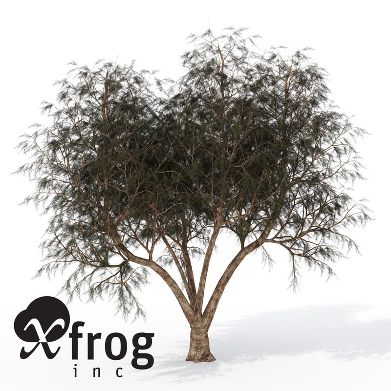 lightwave xfrogplants french tamarisk tree shrub