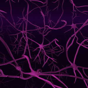 fly neurons synapses 3d model