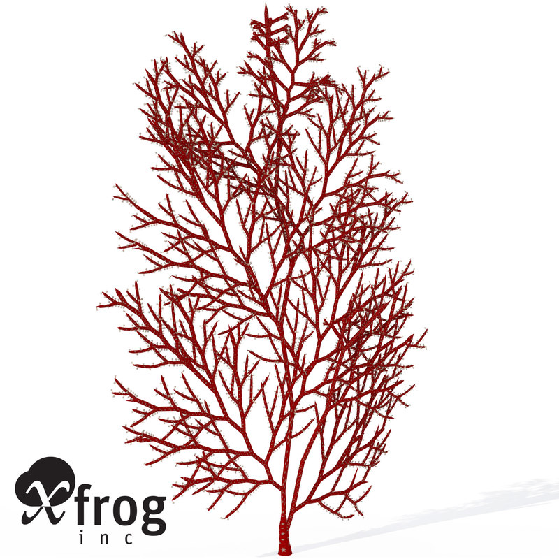 3d model of xfrogplants red sea fan