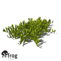3d xfrogplants grape caulerpa alga