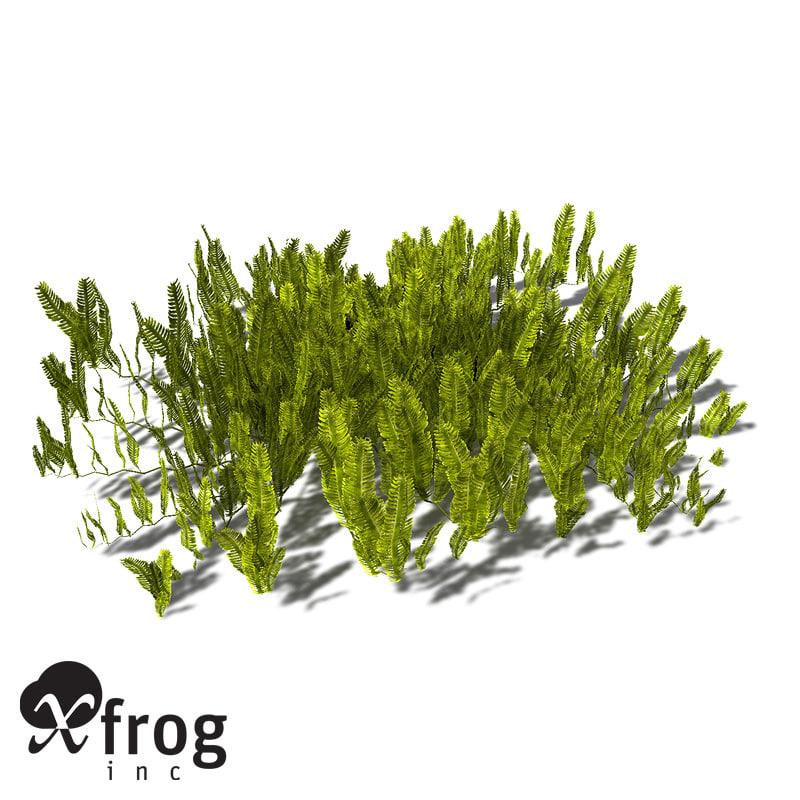 feather caulerpa sertularoides alga 3d model
