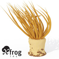 XfrogPlants Tube Anemone