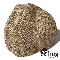 3d model xfrogplants honeycomb coral plant