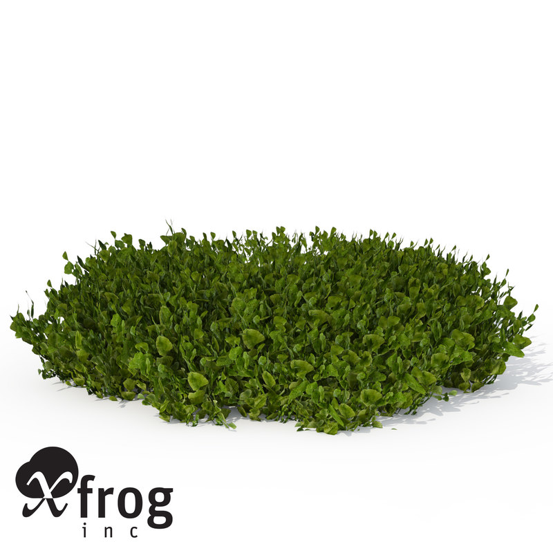 3ds max xfrogplants halimeda alga plant