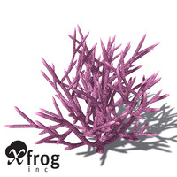 XfrogPlants Birds Nest Coral