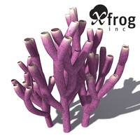 XfrogPlants Colony Siphon Sponge