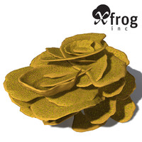 XfrogPlants Yellow Scroll Coral