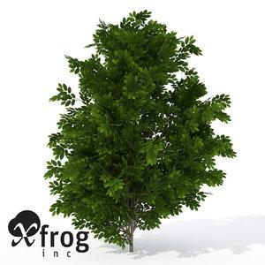 xfrogplants hornbeam tree plant 3d model