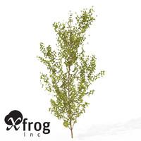 xfrogplants bloodtwig dogwood plant 3d c4d