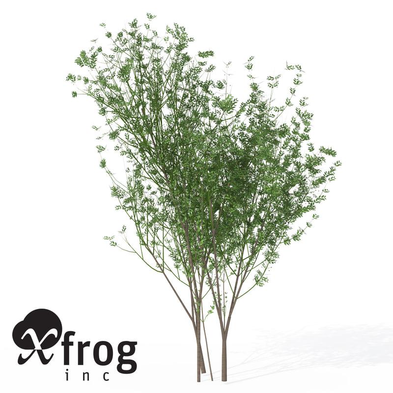 lwo xfrogplants european spindletree europe