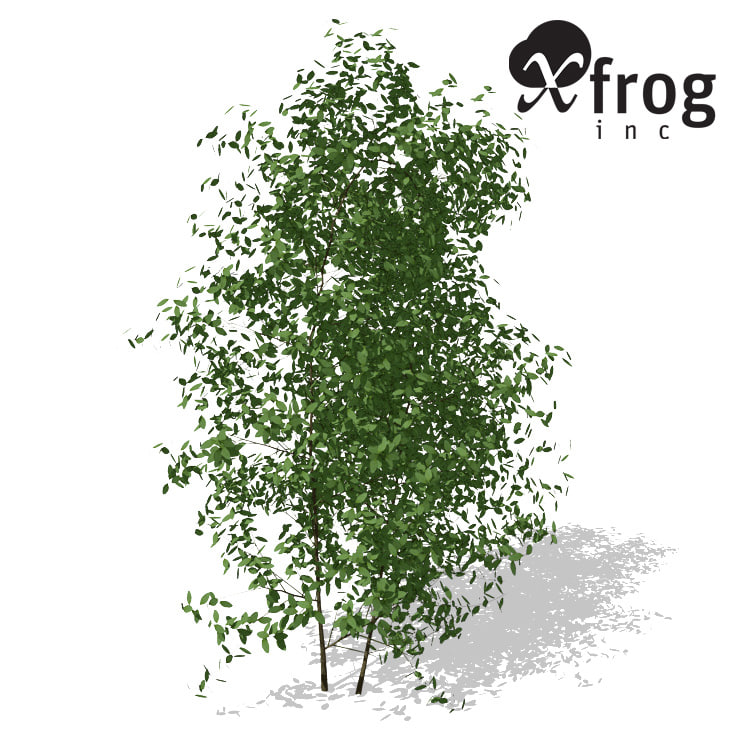 3d xfrogplants common privet plant