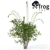 xfrogplants dog rose plant 3d model