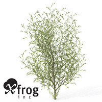 3d model xfrogplants purple willow shrub