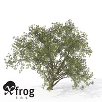 xfrogplants elderberry plant 3d 3ds