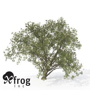 xfrogplants elderberry plant 3d 3ds