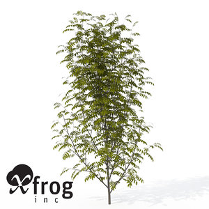 3d max xfrogplants european mountain ash
