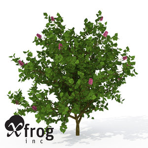 xfrogplants common lilac shrub 3d max