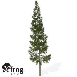 xfrogplants grand fir tree 3d 3ds