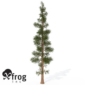 xfrogplants subalpine fir tree max