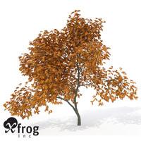 lightwave xfrogplants vine maple tree