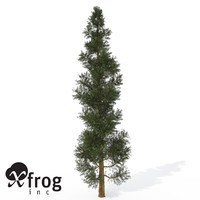 xfrogplants incense cedar tree c4d