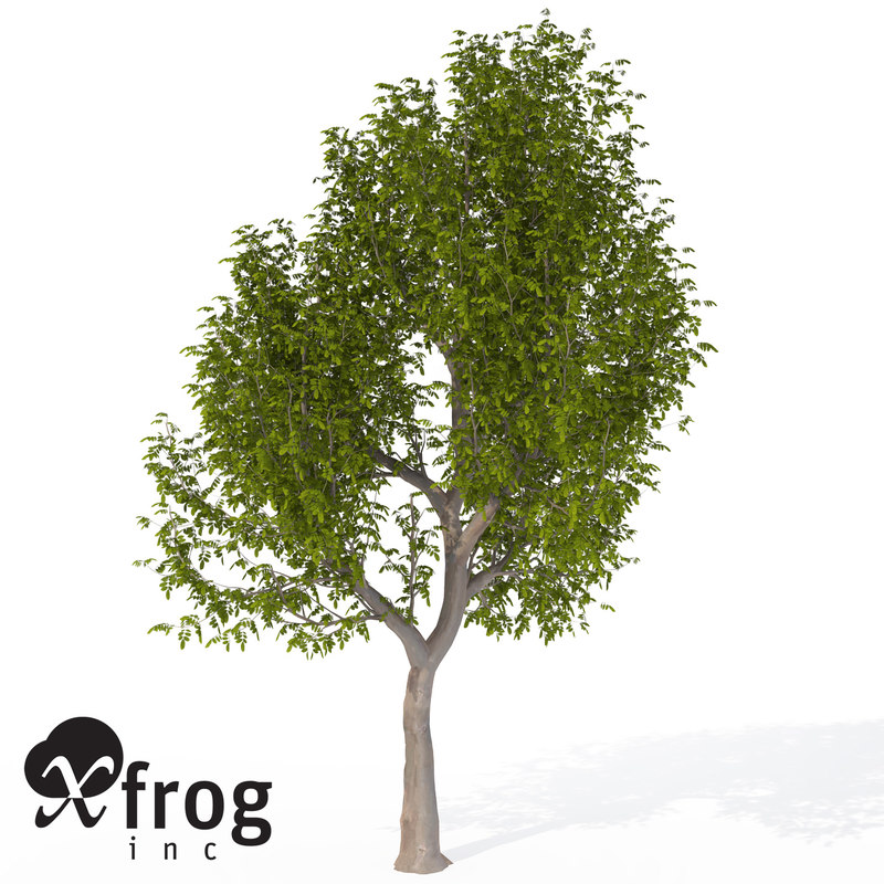 xfrogplants oregon ash tree 3ds
