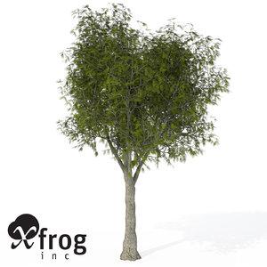 3d model of xfrogplants little walnut tree