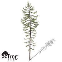 xfrogplants western larch tree lwo