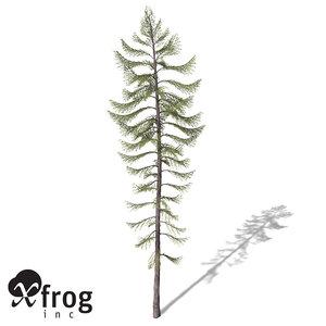 xfrogplants western larch tree lwo