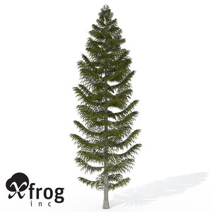 xfrogplants brewer spruce tree c4d