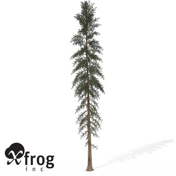 3d xfrogplants white spruce tree