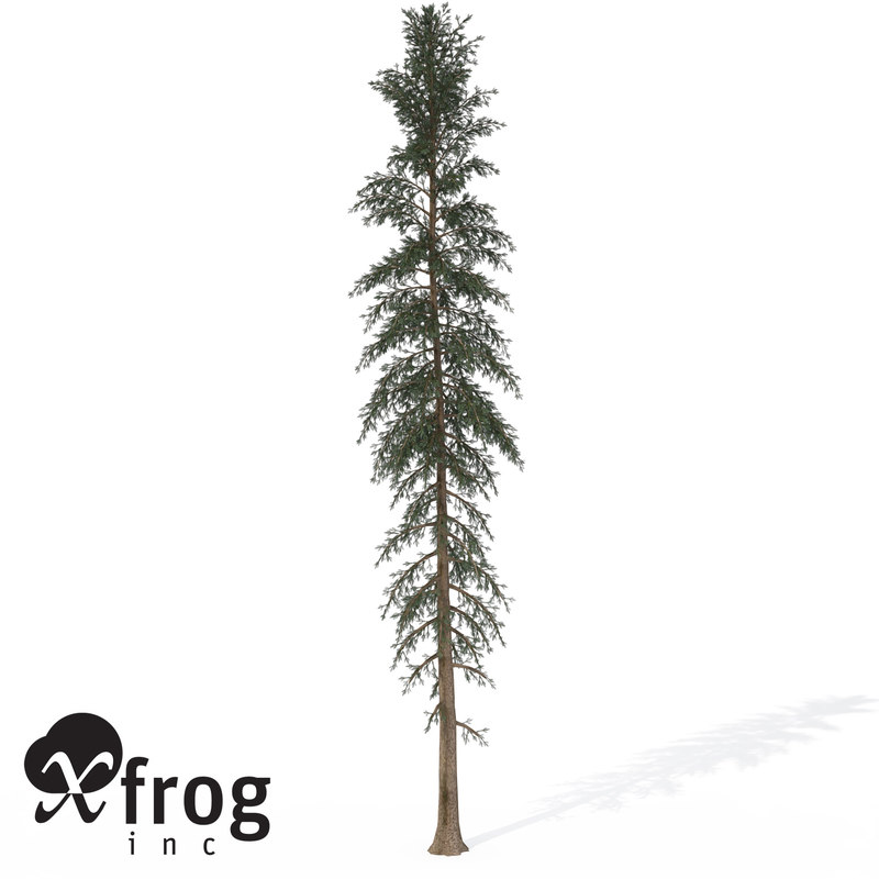 3d xfrogplants white spruce tree