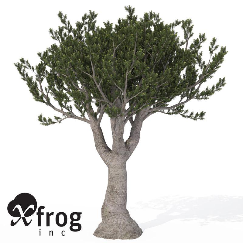 xfrogplants bristlecone pine tree 3d 3ds