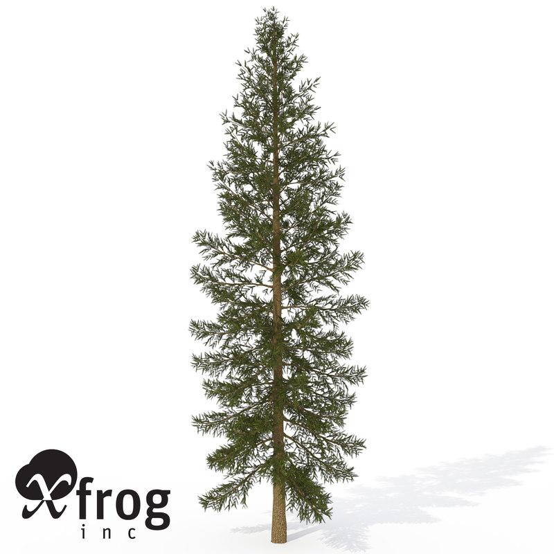 3d model xfrogplants douglas fir tree