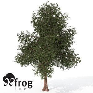 3d xfrogplants pacific yew tree model